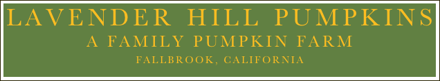 Lavender Hill Pumpkins  A family Pumpkin FARM Fallbrook, California